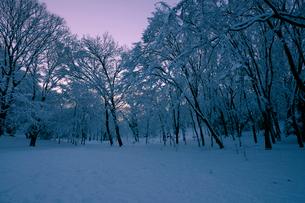 朝焼けの積雪の代々木公園の写真素材 [FYI01443941]