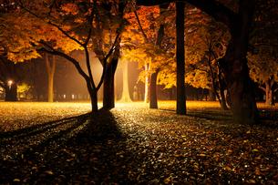 深夜の代々木公園の写真素材 [FYI01443954]