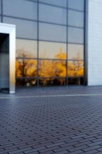 石畳の広場と窓ガラスに映った銀杏並木の黄葉の写真素材 [FYI01443973]