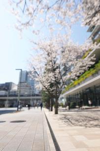 春の京橋中央通りの歩道の写真素材 [FYI01443996]