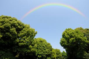 虹と楠の芽吹きの写真素材 [FYI01444003]