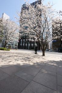 春の京橋中央通りの歩道の写真素材 [FYI01444012]