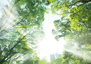 陽光と日比谷公園の新緑の木々の写真素材 [FYI01444018]