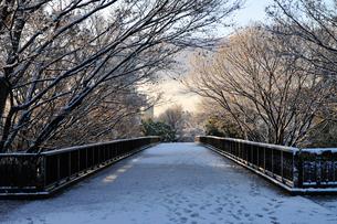 積雪の歩道橋の写真素材 [FYI01444036]