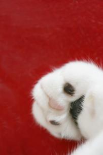 猫の肉球の写真素材 [FYI01444057]