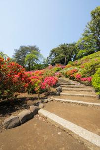 六義園の満開のツツジと藤代峠への散策路の写真素材 [FYI01444088]