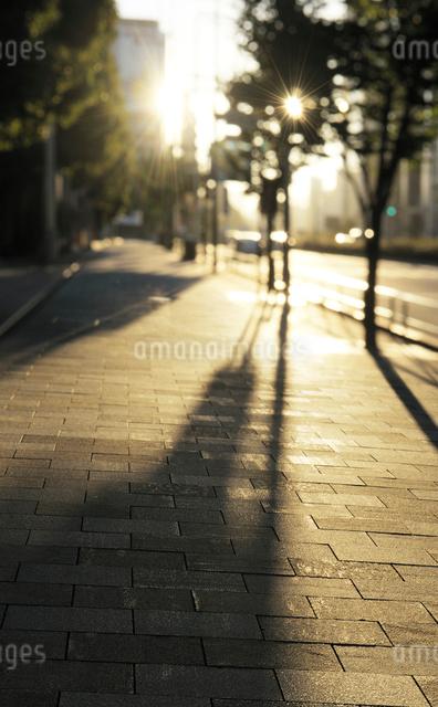 朝日に輝く青山通り歩道の写真素材 [FYI01444103]