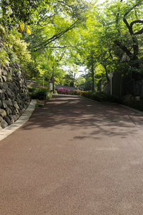 新緑と茶色のアスファルトの坂道の写真素材 [FYI01444107]
