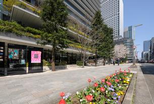 春の京橋中央通りの歩道の写真素材 [FYI01444121]