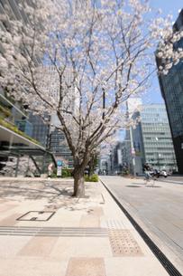 春の京橋中央通りの歩道の写真素材 [FYI01444124]