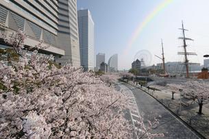 満開の桜とさくら通りの写真素材 [FYI01444160]