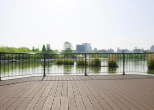 早朝の上野公園蓮池の観察デッキの写真素材 [FYI01444162]