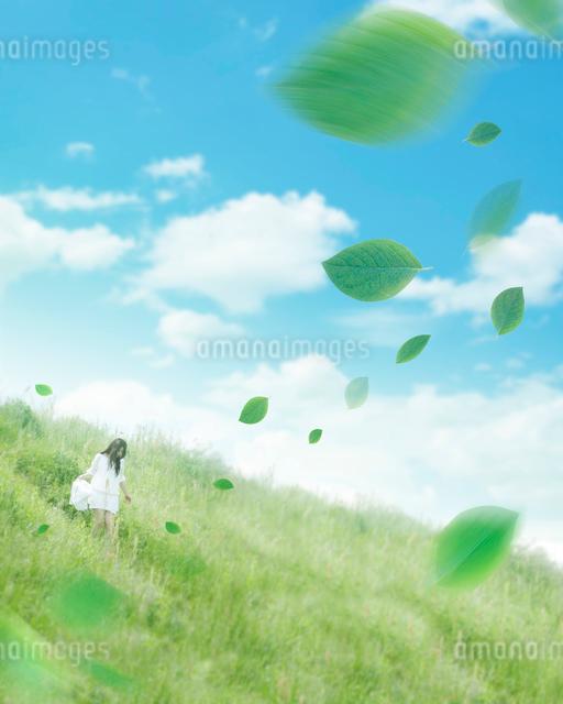 舞う新緑と土手を歩く女性の写真素材 [FYI01444207]