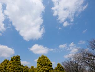 流れ雲と早春の木々の写真素材 [FYI01444322]