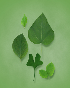 色々な緑の葉のイラスト素材 [FYI01444332]