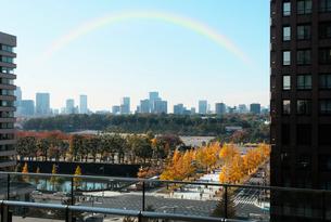 新丸ビル7階テラスから見る紅葉の皇居外苑の写真素材 [FYI01444507]