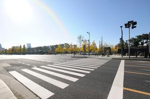 日比谷通りと横断歩道の写真素材 [FYI01444535]