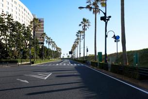 舞浜海岸のパームツリーの並木道の写真素材 [FYI01444537]