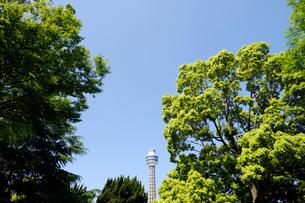 新緑の樹木と横浜マリンタワーの写真素材 [FYI01444552]