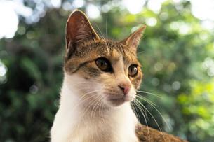 みつめる子猫の写真素材 [FYI01444573]