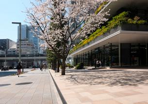 春の京橋中央通りの歩道の写真素材 [FYI01444575]