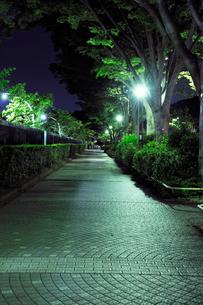 深夜の石畳の歩道の写真素材 [FYI01444576]