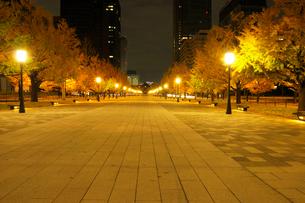 夜明け前の行幸通りと紅葉の銀杏並木の写真素材 [FYI01444587]