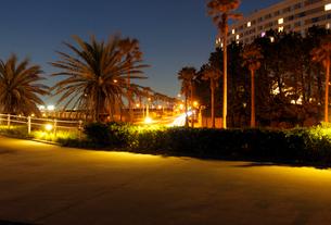 夜の舞浜海岸とパームツリーの並木道の写真素材 [FYI01444636]