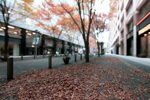 晩秋の丸の内仲通りの写真素材 [FYI01444643]