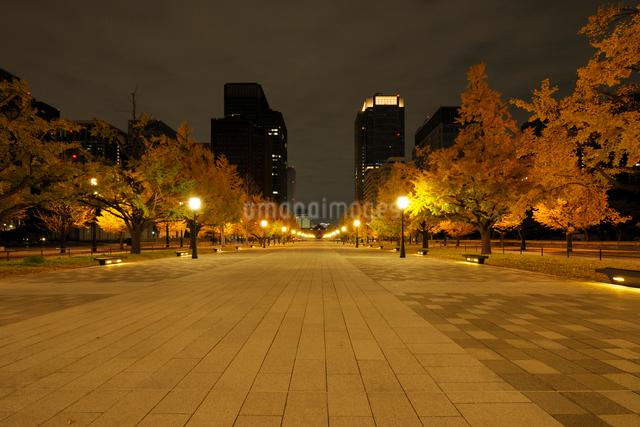 夜明け前の行幸通りと紅葉の銀杏並木の写真素材 [FYI01444675]