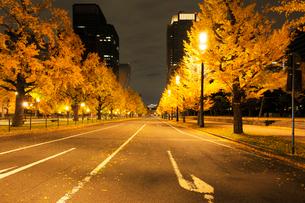 夜明け前の行幸通りの車道と紅葉の銀杏並木の写真素材 [FYI01444689]