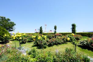 山下公園のバラ園と氷川丸の写真素材 [FYI01444712]