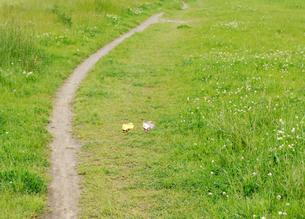 草原の小道と蝶々の写真素材 [FYI01444768]