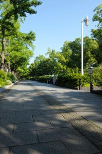 早朝の新緑の山下公園通りの歩道の写真素材 [FYI01444789]