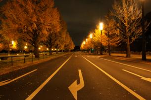 紅葉の銀杏並木と夜明け前の道路の写真素材 [FYI01444799]