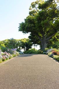 行き止まりの散策路と大木の写真素材 [FYI01444825]