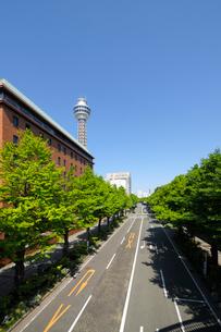 銀杏並木と山下公園通りの写真素材 [FYI01444827]