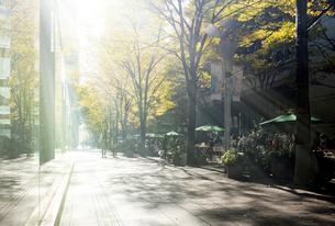 紅葉の丸の内ストリートマーケットの写真素材 [FYI01444863]