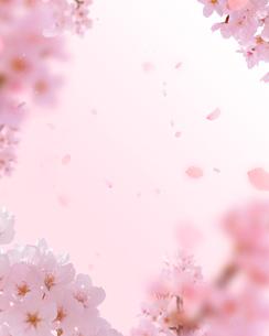 桜の写真素材 [FYI01445020]