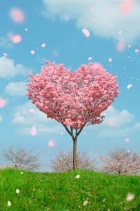 ハートの桜の写真素材 [FYI01445092]