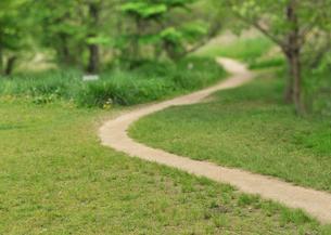 新緑の田舎道の写真素材 [FYI01445194]