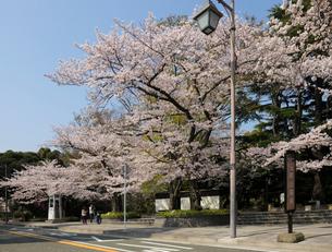 元町公園のバス停と満開の桜の写真素材 [FYI01445261]