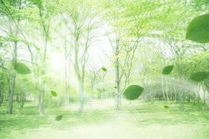 新緑の林と風に吹かれる葉のイラスト素材 [FYI01445393]