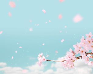 桜の写真素材 [FYI01445661]