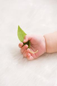 葉っぱを持つ赤ちゃんの手の写真素材 [FYI01446199]
