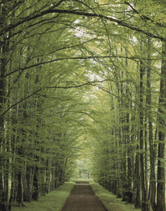アメリカカツラ並木の写真素材 [FYI01447038]