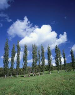 草原とポプラ並木の写真素材 [FYI01447799]