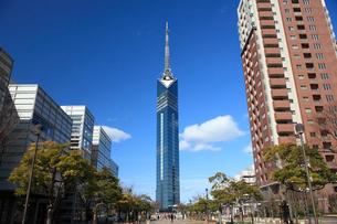 福岡タワーの写真素材 [FYI01448627]