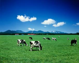 牧場と牛と雲の写真素材 [FYI01449794]