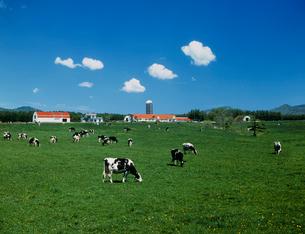 牛とサイロの写真素材 [FYI01450289]